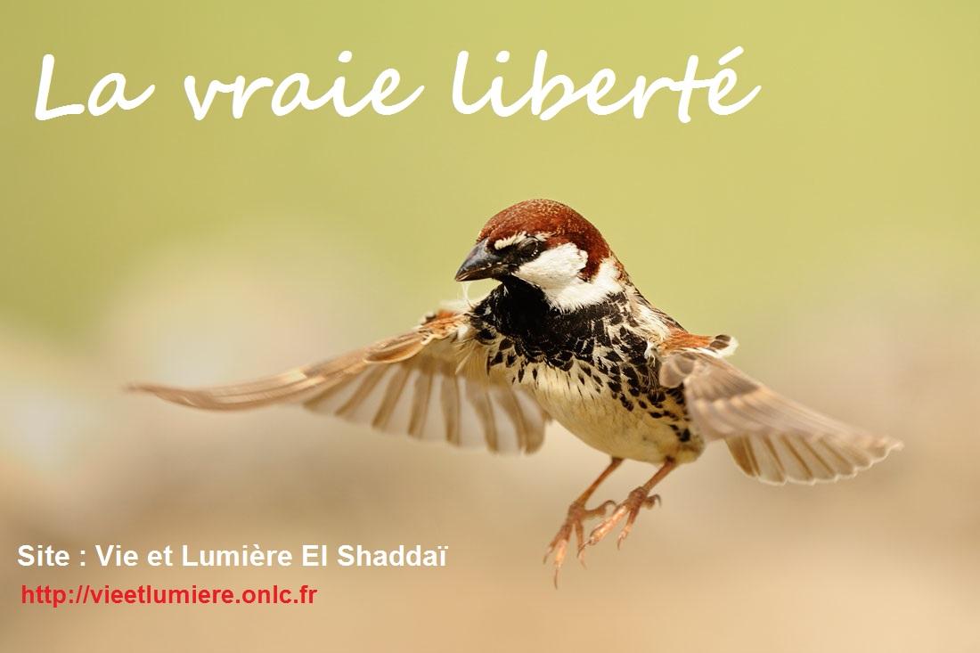 La Vraie Liberté